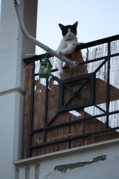 Ο γάτος στα κάγκελα