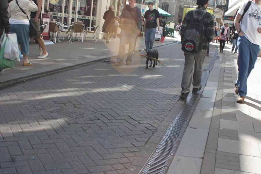 σκύλος ξύλα