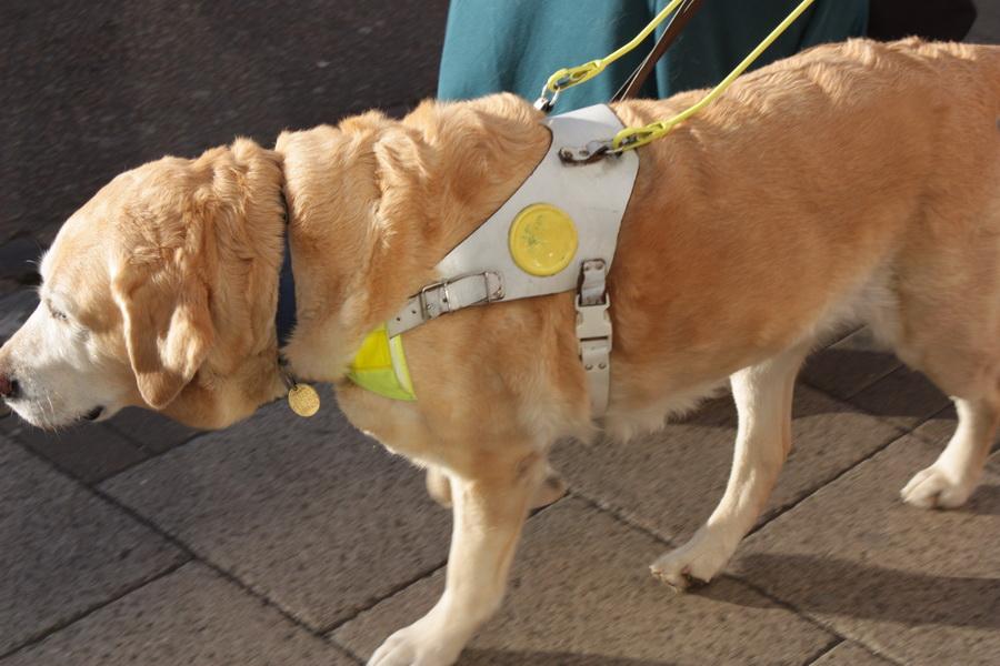 IMG_8971 σκύλος συνοδός