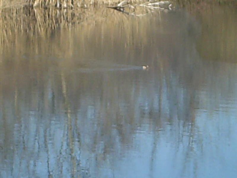 HPIM0323 λίμνη Αγρα