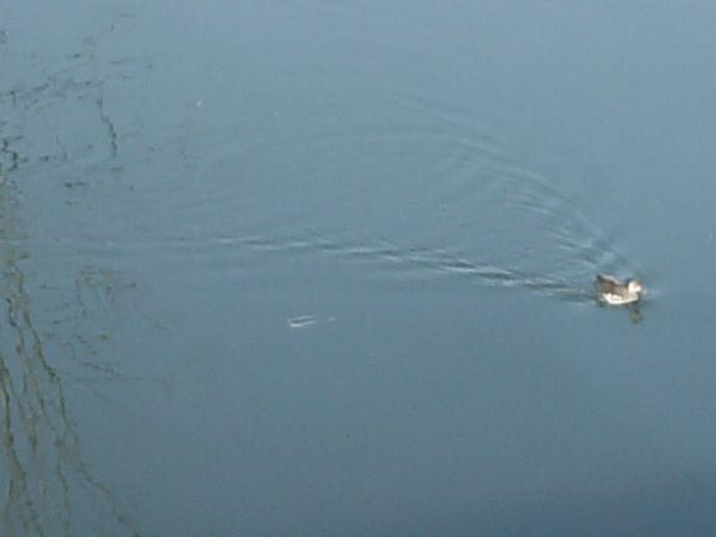 HPIM0324  λίμνη Αγρα