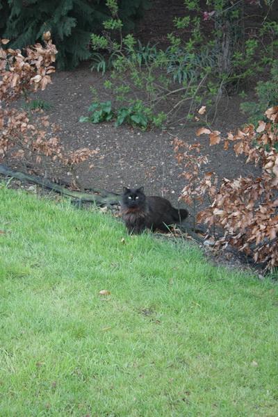 IMG_4730 μαύρος γάτος