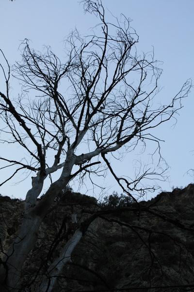 Δένδρο τον Χειμώνα
