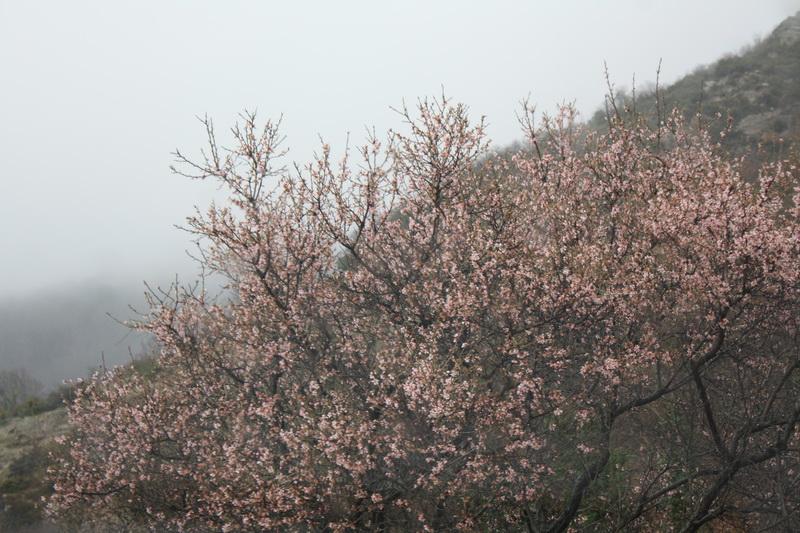 ανθισμένο δένδρο