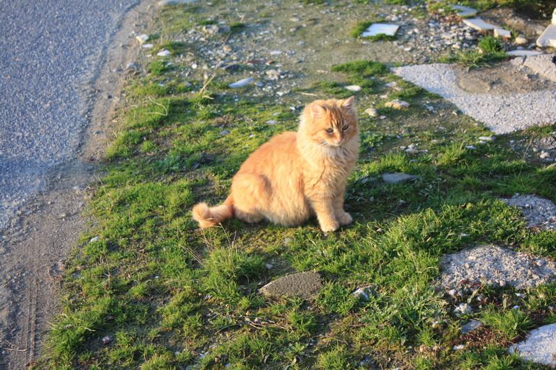 Ξανθιά γάτα