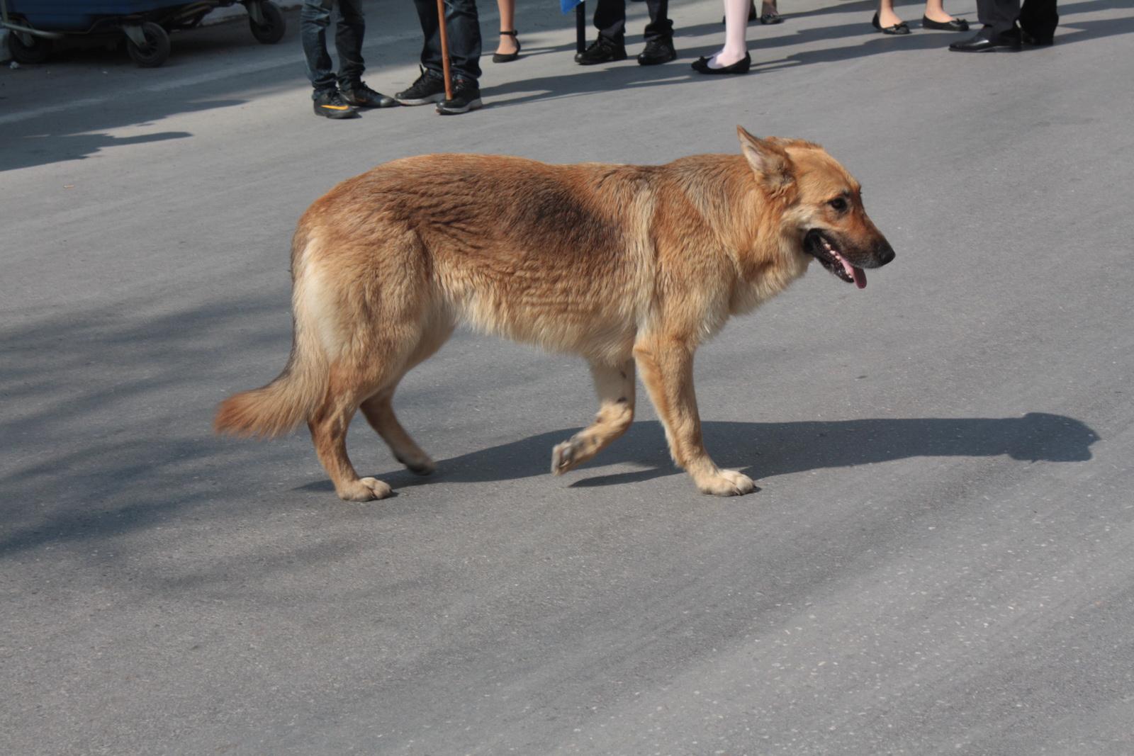 IMG_0087 σκύλος_resize