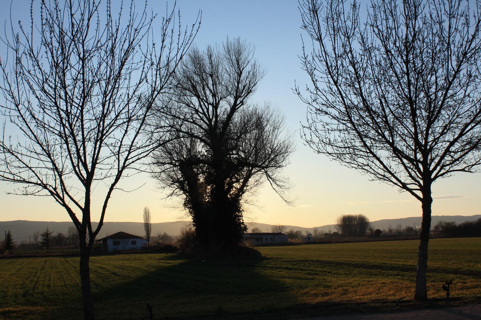 γυμνά δένδρα