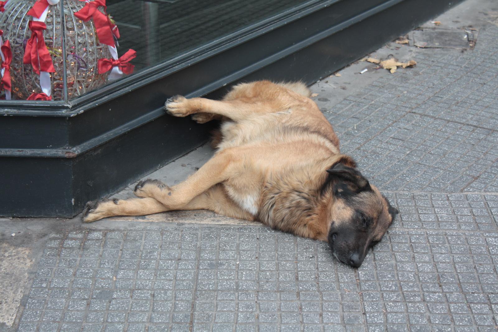 IMG_9643 σκύλος_resize