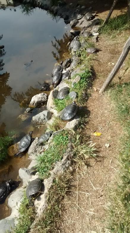χελώνες