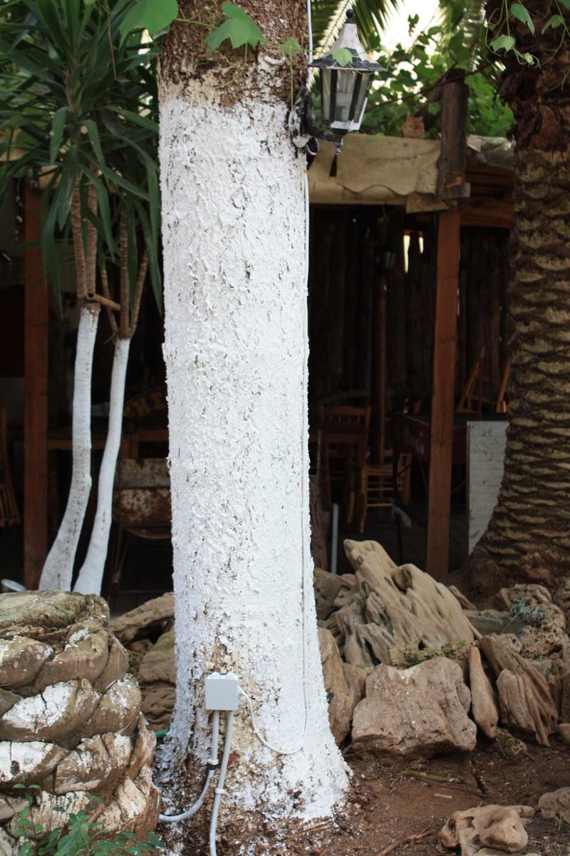 Δέντρο .... κολώνα