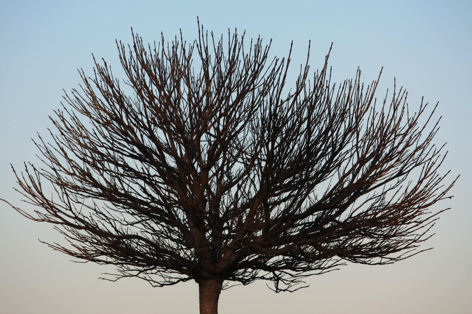 IMG_0036 γυμνό δένδρο_resize