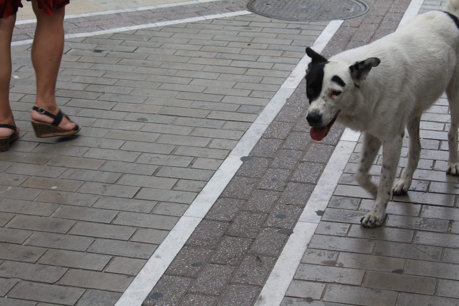 Ο σκύλος διπρόσωπος