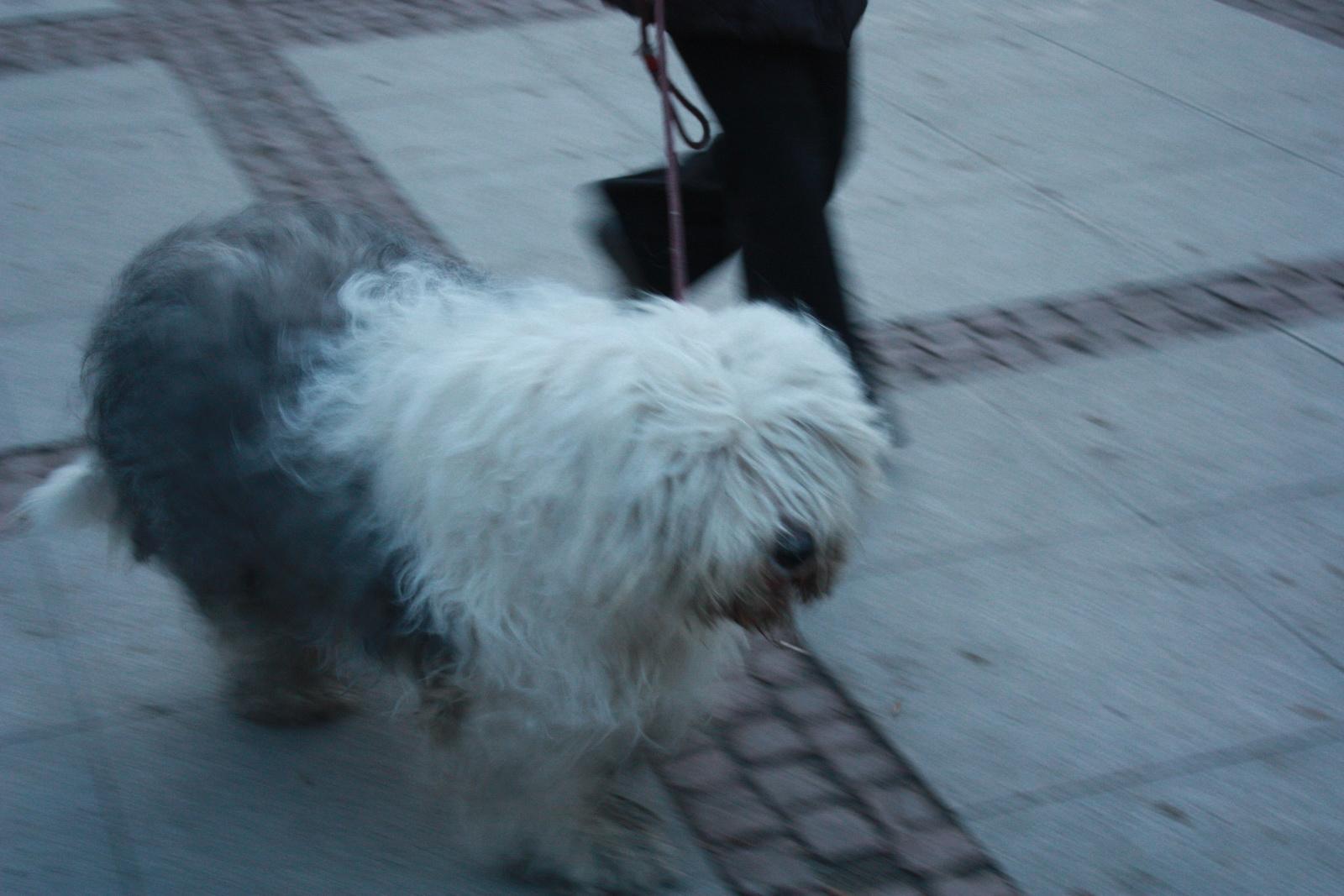IMG_0064 σκύλος_resize